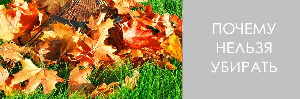 почему нельзя убирать листву