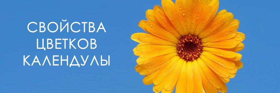 полезные свойства цветков календулы