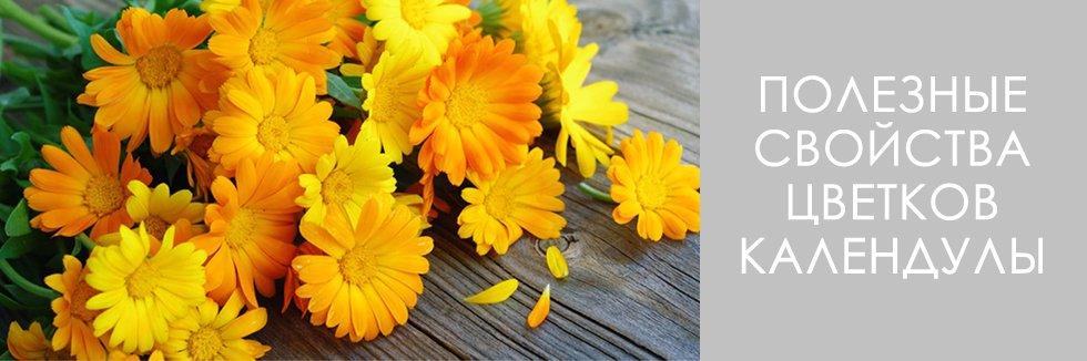 свойства цветков календулы