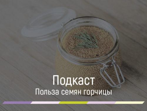 Польза семян горчицы для организма человека