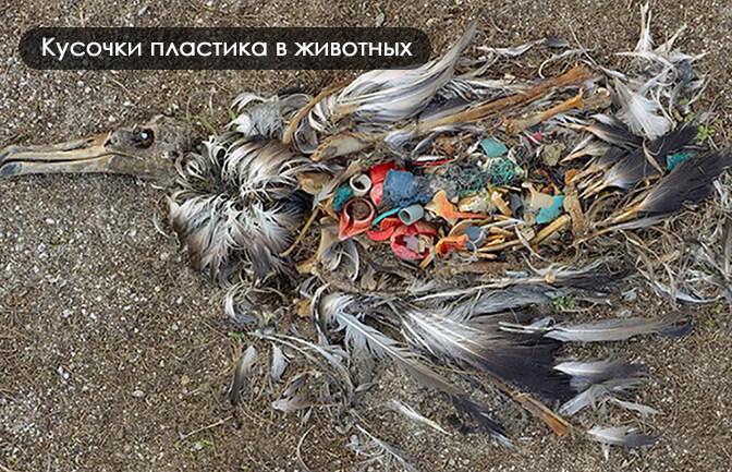 микропластик в животных