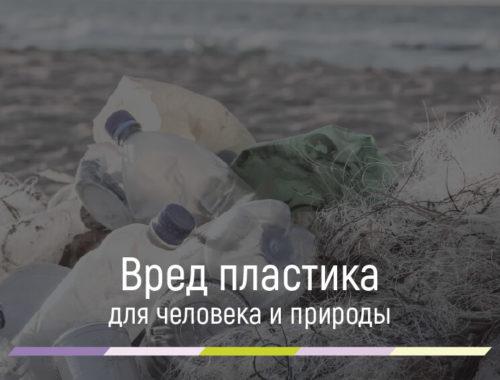 Вред пластика для окружающей среды и человека