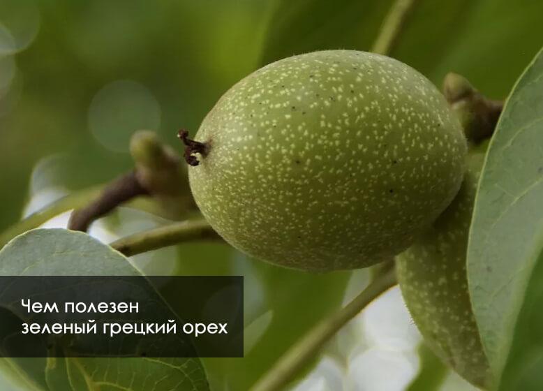 чем полезна зеленая орех
